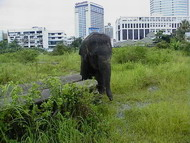 bangkok_elephant