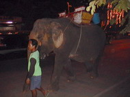 begging thai elephant