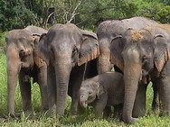 elephant_family_tj