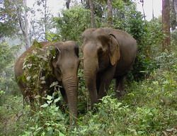 thailand elephant conservation