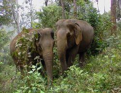thailand elephant conservation