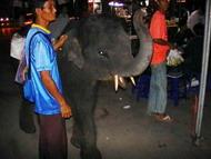 trick_elephant