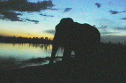 wild elephants cambodia
