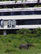 bangkok_street_elephant
