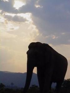 elephants bangladesh