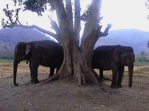 elephants bhutan