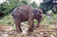 rubbish dump elephant