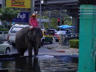 thai_street_elephant